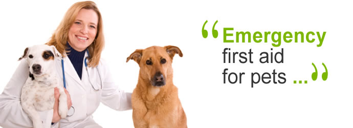 Emergency First Aid for Pets