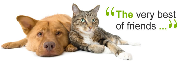 Pet Health Matters at VetsDirect.com