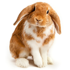 rabbit-health-home-image