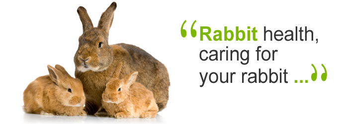 Rabbits & Rabbit Health